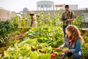 permaculture sur un toit